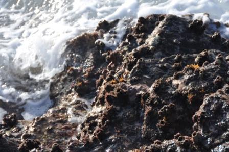 El Área de Residuos y la Reserva de la Biosfera impulsan una campaña para racionalizar el uso de plásticos