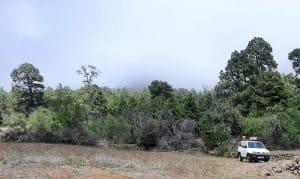 La Hacienda de El Pino concentrará una colección de todas las variedades de almendros de la Isla