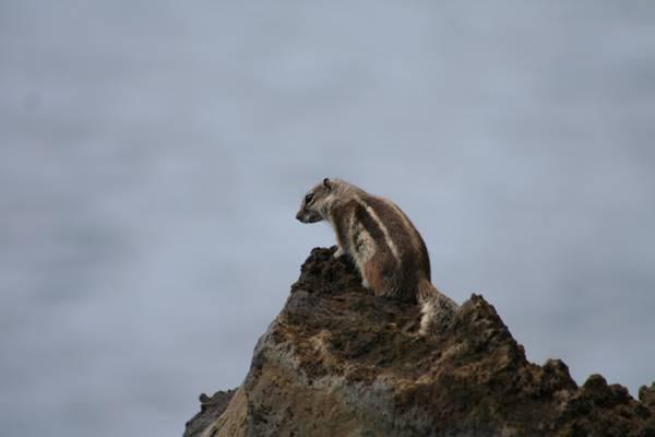40 especies invasoras ponen en riesgo la biodiversidad insular