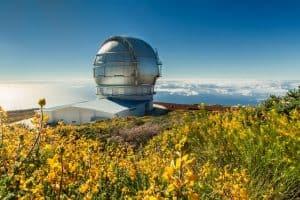 La Reserva Mundial de la Biosfera La Palma y el IAC elaboran un protocolo para prevenir y controlar especies invasoras