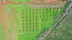 El Paso impulsa un proyecto para recuperar el cultivo del almendro.