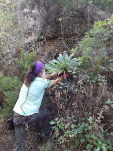 poryecto LIFE IP Azores Natura